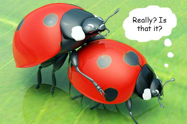 ladybirds having sex