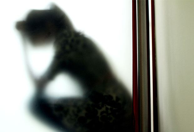 Shadow of a girl crouching behind a window