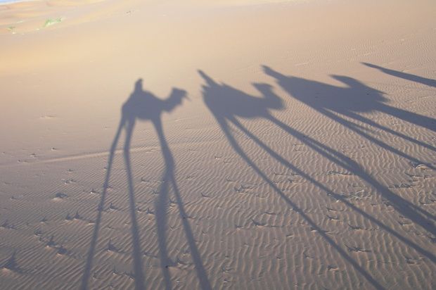 shadows of three camels in the desert.