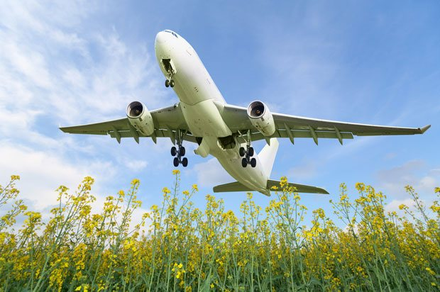 plane with flowers
