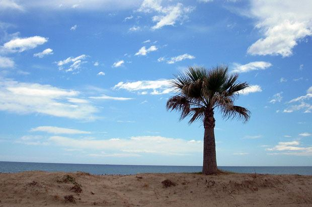 picture of a beach, sea and palm tree.
