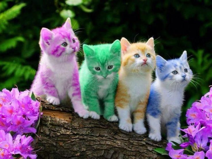 colourful kittens