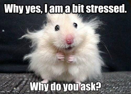 stressed hamster meme