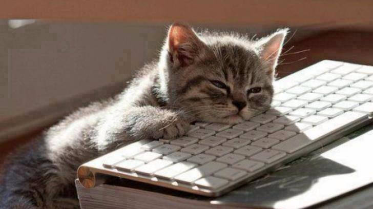 kitten falling asleep on keyboard